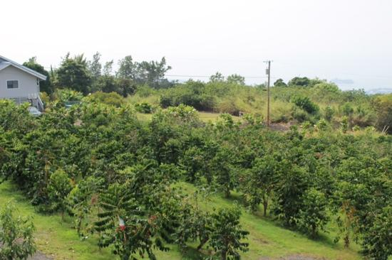 coffee-farm