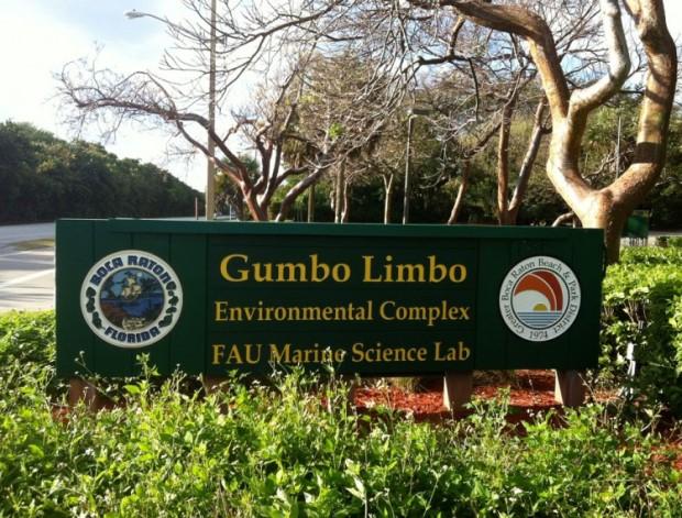 GumboLimbo-750x570