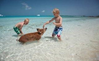 exumas-bahamas-pigs-PIGBEACH0517